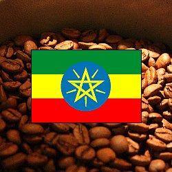 画像1: エチオピア イルガチャフェ サカロ【200g】